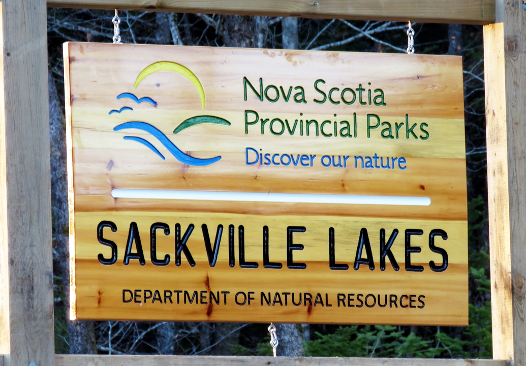Horrific dying forest at Sackville Lakes in Nova Scotia Canada